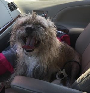 Woodcock's dog post mpl surgery.JPG