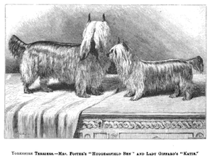 The Yorkie in History