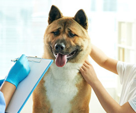 Pain Management for animals