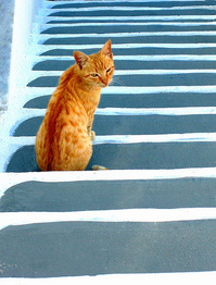 Cats with arthritis might have trouble going up and down stairs.