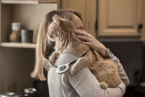 Assisi_Cats_Feb28_17_1029.png