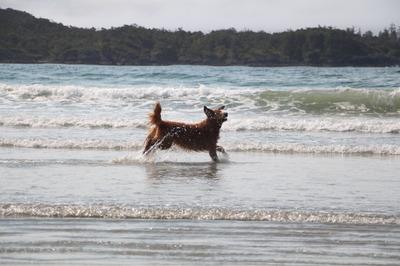 Belle Dancing in the Waves.JPG
