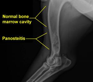 Pano x-ray.