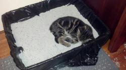Using the litterbox for a nap doesn't count as using the litterbox.