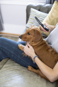 Calmer Canine being held in place over dog by owner on couch