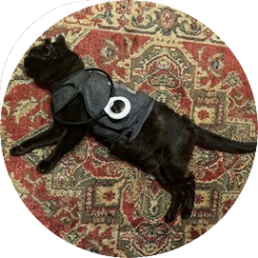 Black cat lying on rug wearing Assisi Loop around her neck