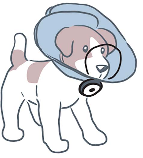 DentaLOOP Bonnet on dog